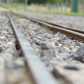 narrow guage by Nick Parker - Transportation Railway Tracks ( narrow, guage, railway track,  )