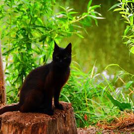 by Angela Codrina Andries Bocse - Animals - Cats Portraits
