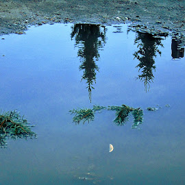 REFLECTIONS IN THE PUDDLE by Wojtylak Maria - Nature Up Close Water ( water, moon, sky, reflections, puddle, conifers )