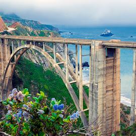 Bixby Bridge by Tobias Andersson - Landscapes Waterscapes ( fog, big sur, california, bixby, pacific, ocean, view, bridge, flowers )