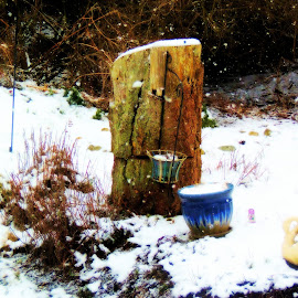 Stump And Snow by Becky Luschei - Artistic Objects Other Objects ( stump, artistic, wintry day, reflection gardens, ortonesque take )