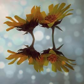 by Ksenija Glavak - Digital Art Abstract (  )