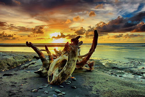 Cast away leave a piece off beauty on the ground by Agoes Antara - Landscapes Waterscapes
