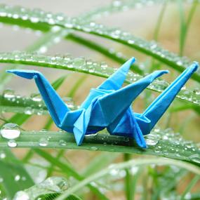 Blue dragon in garden by TONY LOPEZ - Artistic Objects Still Life ( macro, blue, green, dragon, origami, garden, droplets,  )