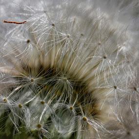 by Pavel Vlček - Flowers Single Flower