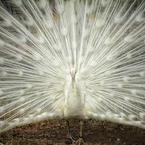 by Rakhman Matsunaga Stavolt - Animals Birds