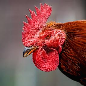 by Stephen Hooton - Animals Birds