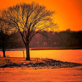 Solitary Tree at Stoney January 19th 2018_.jpg
