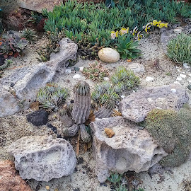 Rock Garden by Gail Marsella - Nature Up Close Gardens & Produce ( rock garden, green, san diego botanical garden, garden, cactus )