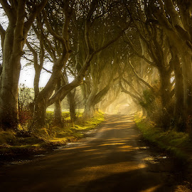 Morning Stroll at the Dark Hedges by Eoin McCullagh - Landscapes Forests ( ireland, co antrim, trees, dark hedges, light, sun rays )