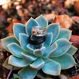 Wedding Rings by Rina Walton - Wedding Details ( detail, unique, wedding, rings, bride, groom )