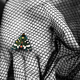 Scarlet Tiger Moth on Net by Mike Hall - Animals Insects & Spiders ( butterfly, selective colour, black and white, insects, moth )
