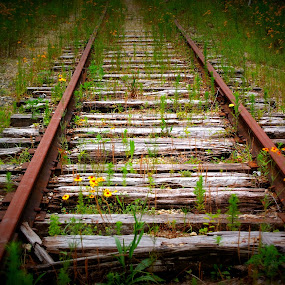 Abandoned tracks by Brenda Shoemake - Transportation Railway Tracks
