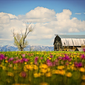 Wyoming by Benoit Beauchamp - Landscapes Prairies, Meadows & Fields (  )