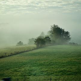 Misty Morning  by Tracy Gruver - Novices Only Landscapes