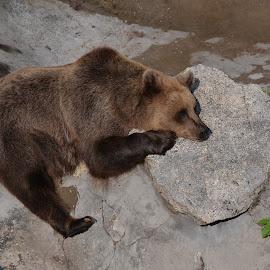 by Gigi Furtuna - Animals Other Mammals
