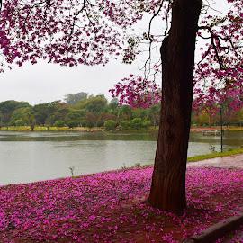 by Vera Vilela - City,  Street & Park  City Parks (  )