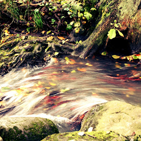 Autumn by Tanya Moroza - Nature Up Close Water ( autumn, forest, river )