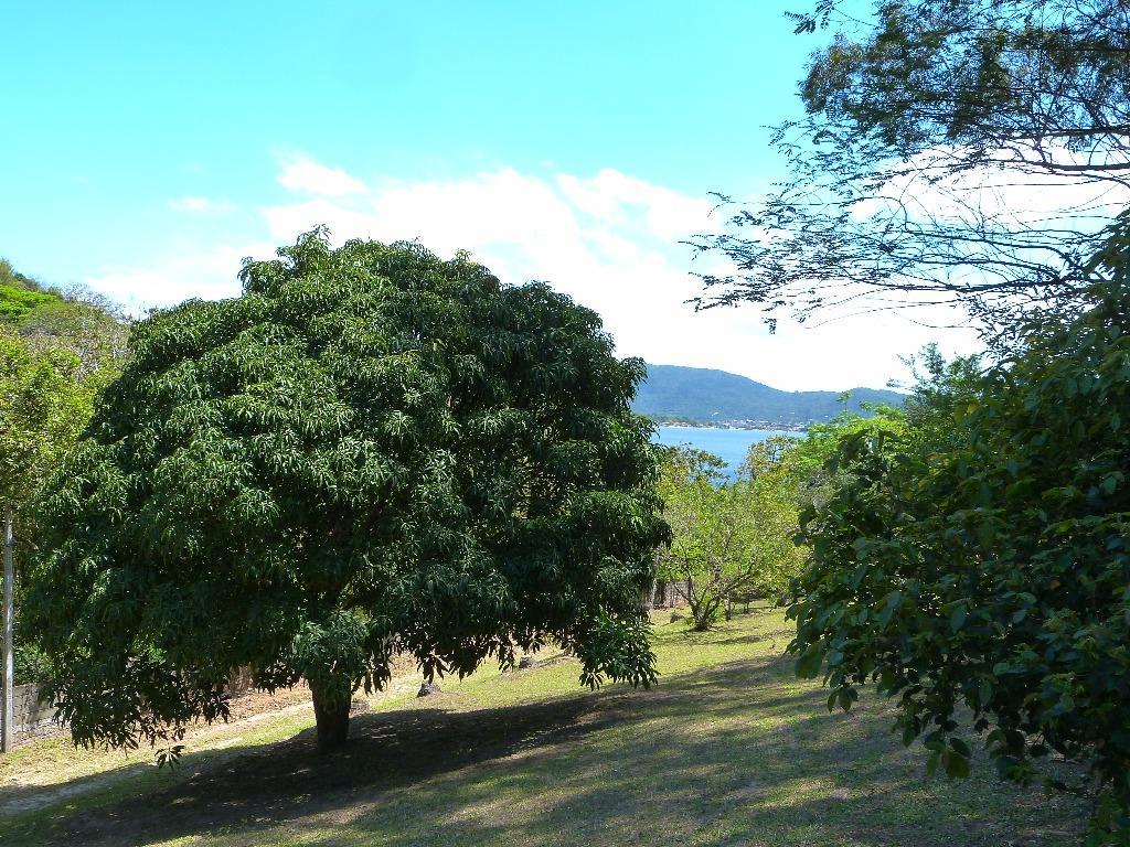 Terreno, Lagoa da Conceição, Florianópolis (TE0205) - Foto 14