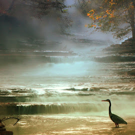 VISITOR TO THE FALLS by Dana Johnson - Landscapes Waterscapes