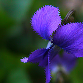 Violent by Cecilia Sterling - Digital Art Things ( macro, swirl, violet, flower, photoshop )