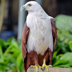 by Koento Birowo - Animals Birds