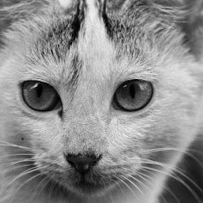 e by Aritra De - Animals - Cats Portraits