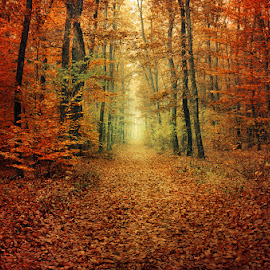 20151103-DSC_0277 by Zsolt Zsigmond - Landscapes Forests ( colorful, autumn, fall, path, trees, forest, light )