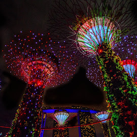 The Lighted Trees   by Joseph Law - City,  Street & Park  Night