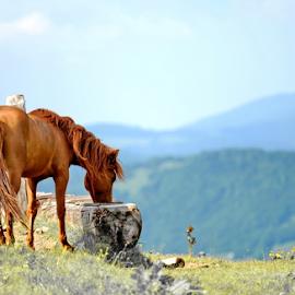 5 by Aleksandar Kordic - Digital Art Animals