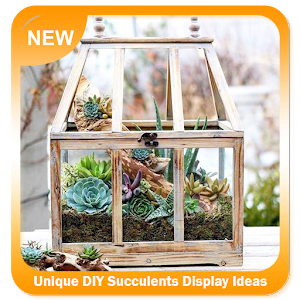 Download Unique DIY Succulents Display Ideas for Windows Phone