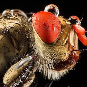 My Detail.... by Vincent Sinaga - Animals Insects & Spiders