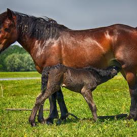 by Jasenka LV - Animals Horses