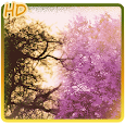Purple spring tree background