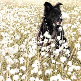 Lady  by Michael Croghan - Animals - Dogs Portraits ( look, girl dog, white, bog, portrait, catchlight, pet, happy, summer, thoughtful, proud, flowers, dog, black, spacial )