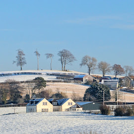 View from my bedroom by Stephen Crawford - Landscapes Weather ( ostrich trees, winter, snow, back door view, annbank,  )