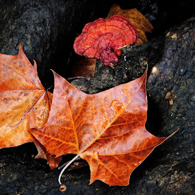 by James Egbert - Nature Up Close Leaves & Grasses ( fall leaves on ground, fall leaves, james h egbert, nature, art, fine art, tennessee )