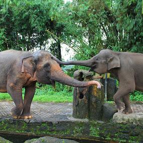 Mereka pun punya canda... by Erick Suminta - Animals Other Mammals