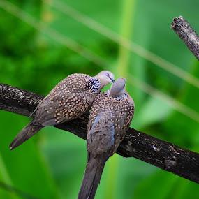 Everything I do, I do it for You by Dibyendu Banik - Novices Only Wildlife ( love, life, togetherness, birds, alone )