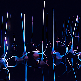 Neon by Jim Signorelli - Abstract Light Painting ( lights, neonl )