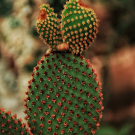 Cactus by Margie Troyer - Nature Up Close Other plants