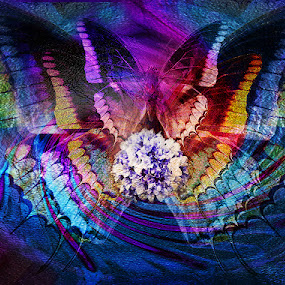 BUTTERFLIES  by Carmen Velcic - Digital Art Abstract ( butterfly, purple, blue, colors, absctract, flowers, digital )