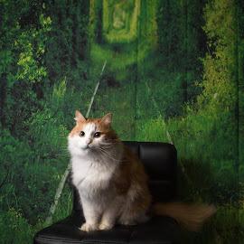 На паспорт сфотографируйте пожалуйста by Nikolajs Slahta - Animals - Cats Portraits