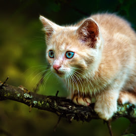 wariness by BO LED - Animals - Cats Kittens ( cat, nature, eyes, animal )