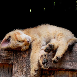 relaxation by Saikat Das - Animals - Cats Kittens