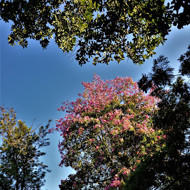 by Orpa Wessels - Nature Up Close Trees & Bushes