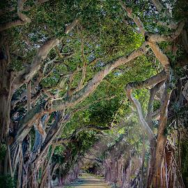 Coral Gables by William Underwood  - City,  Street & Park  Neighborhoods