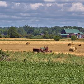 by Jennifer O'Keefe - Landscapes Prairies, Meadows & Fields (  )