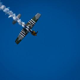 Yak-52 Underwing by Craig Warton - Transportation Airplanes ( redcliffe kite festival, craig warton, plane, aerobatics, yak 52, smoke, airshow )