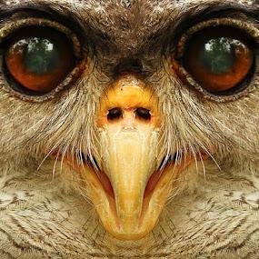 by Yan Abimanyu - Animals Birds